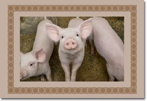 Hands of Hope - Three Pigs Gift Card (1)